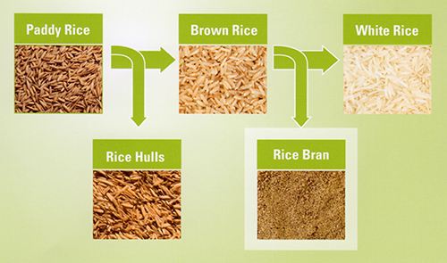 How Much Rice Bran For Feed Animal/ Price Of Rice Bran