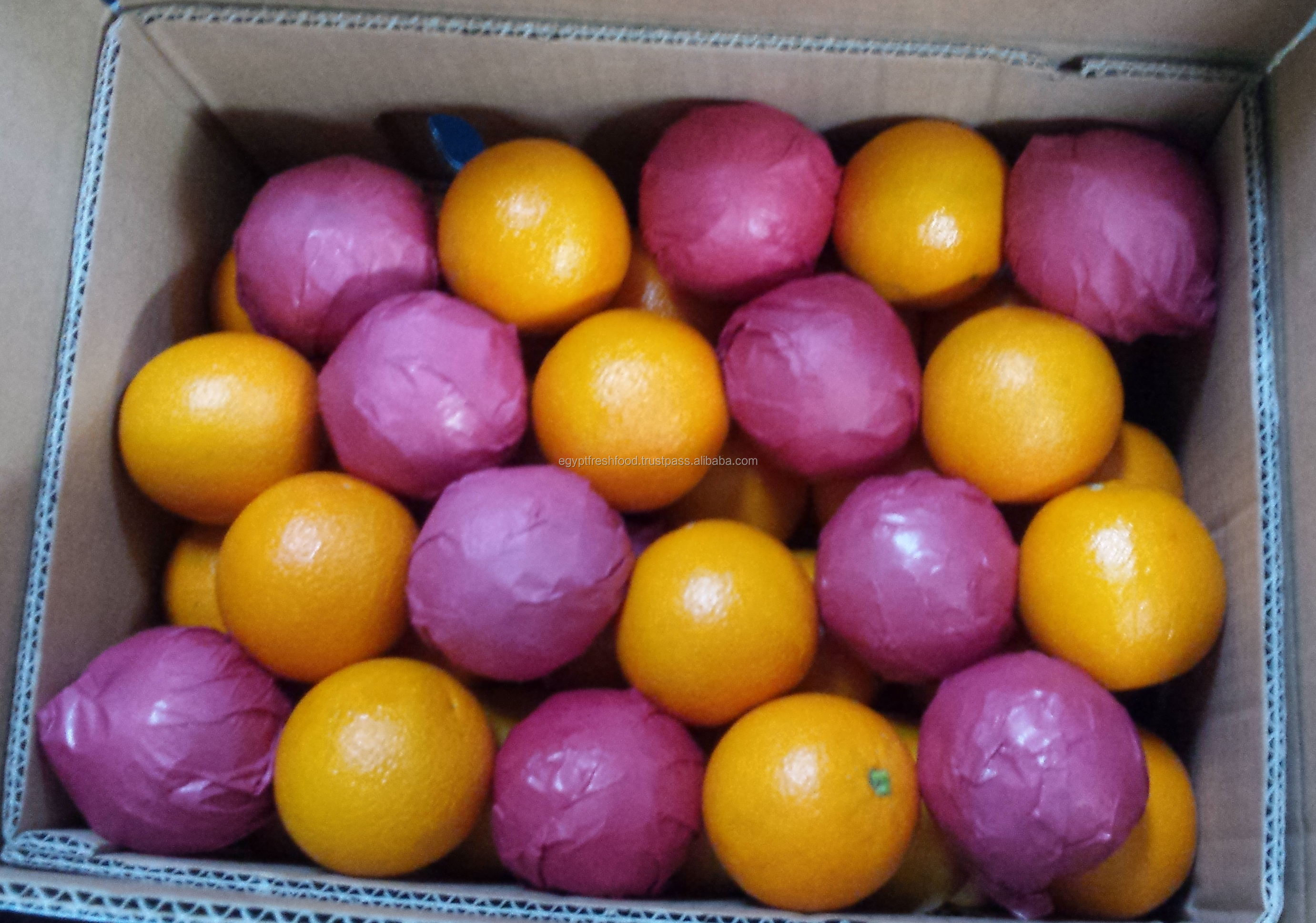 Frische Valencia orange und Mandrin orangen, Citrus aus Ägypten, Bereit zu export saison 2020