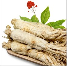 Hohe Qualität Getrocknete/Frische Rote <span class=keywords><strong>Ginseng</strong></span> <span class=keywords><strong>Wurzel</strong></span>