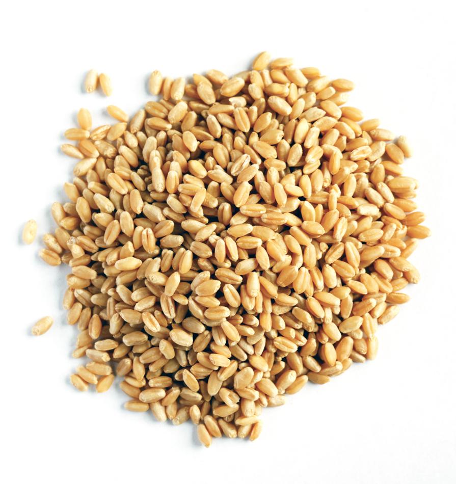 wheat grain for sale buy wheat grain for sale product on alibaba com