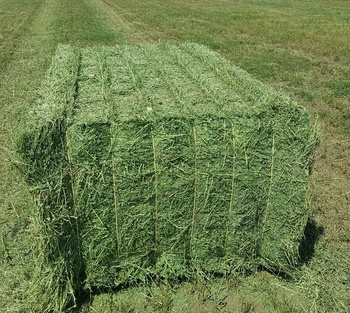 Alfalfa Hay Bales For Sale - Buy Cattle Hay Round Bale Feeder,Bales Of Peat  Moss,Raw Cotton Bales For Sale Product on Alibaba com
