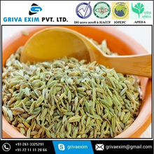 Green Fennel Seeds For All over World