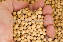 SoyBean / Soya Bean Seeds Supplier From EUROPE
