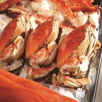Live Dungeness Crab (Cancer magister) from Mexico