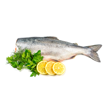 High Quality Frozen Pink Salmon Fish Supply at Bulk Price