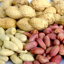 groundnut kernels or Peanuts