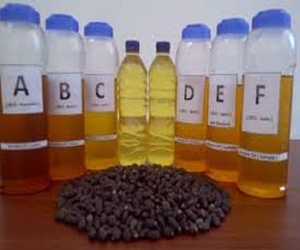 High Quality Pure Refined / Crude Jatropha oil