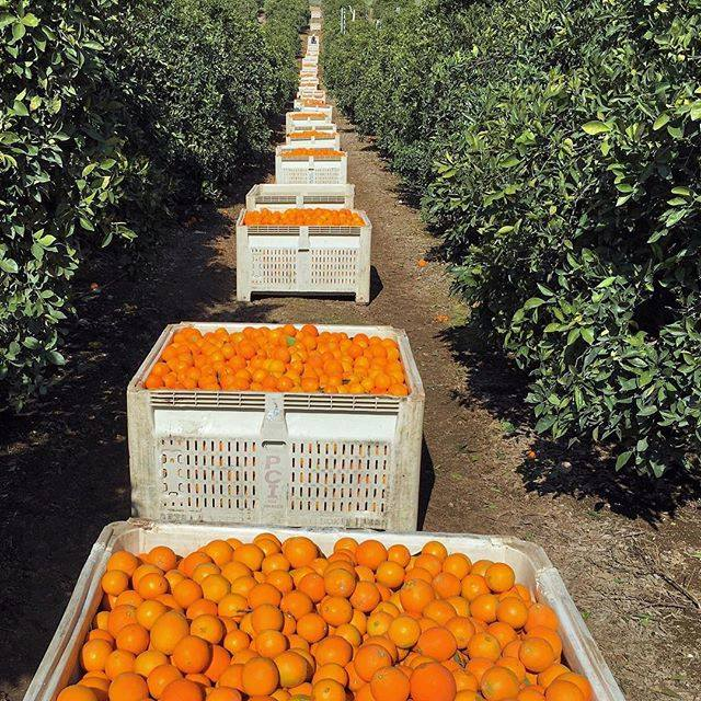 New 2017 Quality Orange Fruits Available For Exports