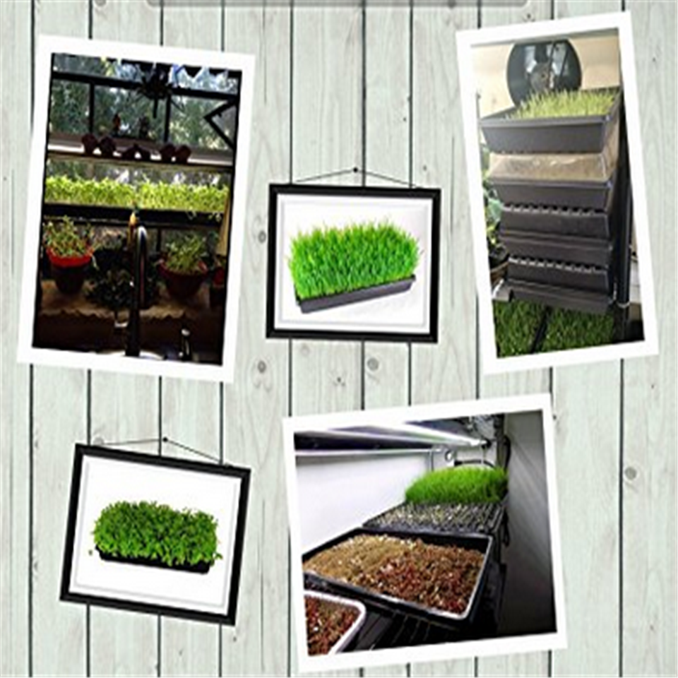 High quality propagation tray dome,Agriculture germination Tray In Green House
