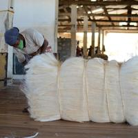 Top Kenya Quality Sisal Fibre / Sisal Hemp / Natural UG Grade. BEST PRICE IN THE MARKET