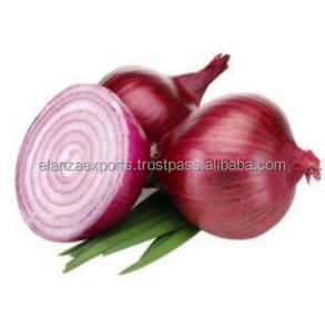 Newest crop Fresh Market Price Red Onion Exporter/india's best selling fresh red onion for export