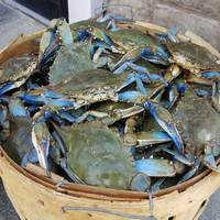 Frozen Blue Swimming Crab / Live Red King Crabs