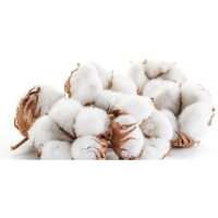 Top Quality Proud Turkish Direct from harvesting raw Cotton