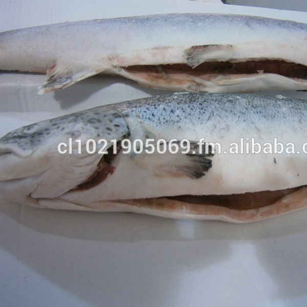 Chile Salmon, Chile Salmon Manufacturers and Suppliers on