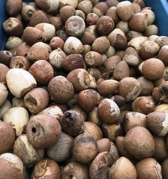 Betel Nut - Buy Areca Nut Or Betel Nut Product on Alibaba com