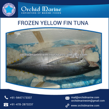 Frozen/ Fresh Delicious Whole Round Yellowfin Tuna Available for Bulk Supply