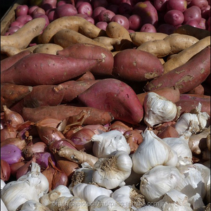 Magic Gro Fertilizer Wholesale, Fertilizer Suppliers - Alibaba