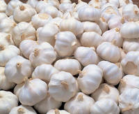 Fresh Normal White Garlic from Philippines 2018