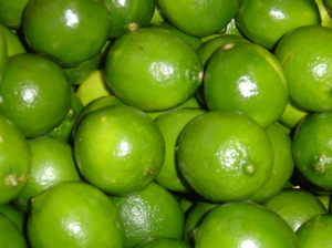 HIGH QUALITY FRESH GREEN LIME // FRESH SEEDLESS LIME
