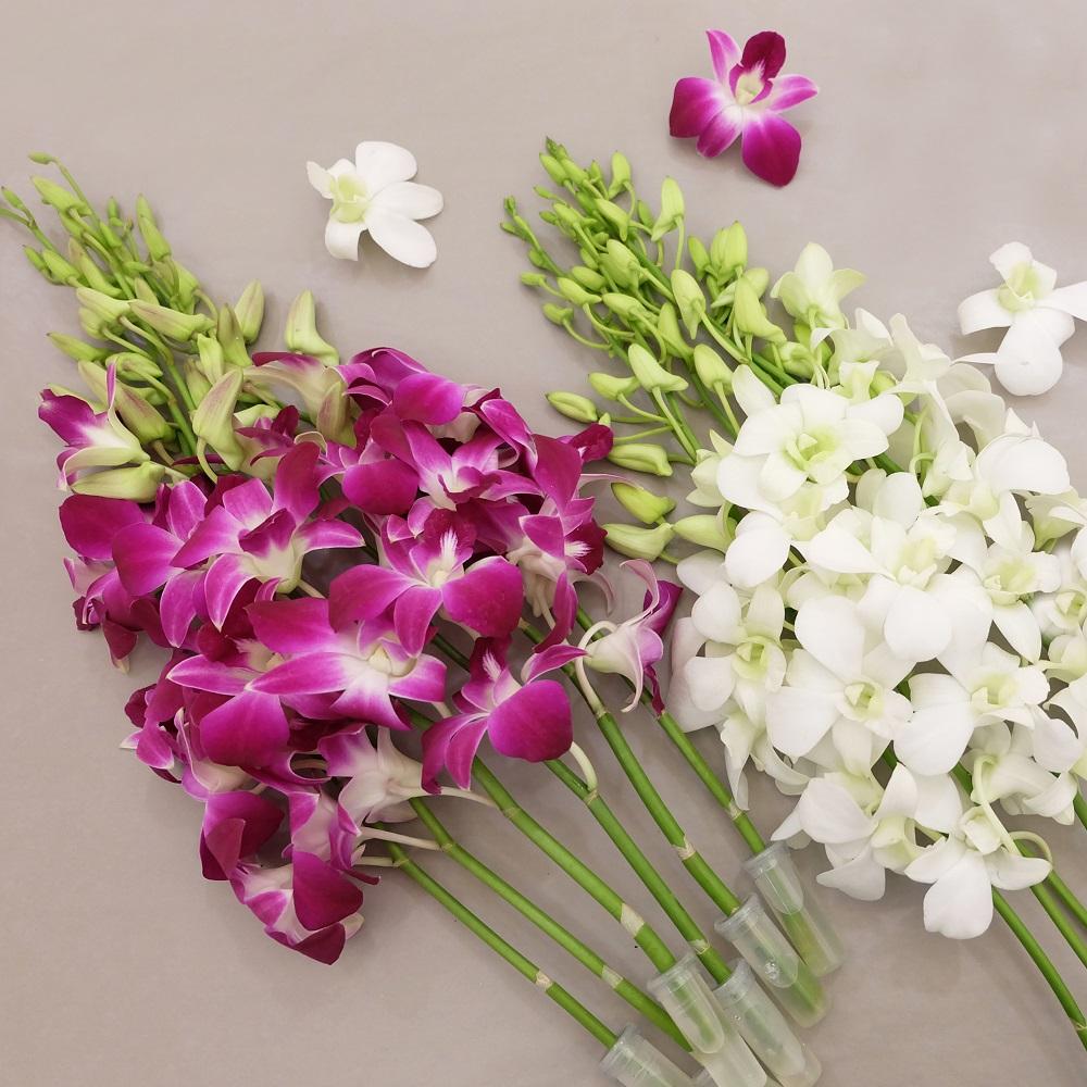 Для, орхидей дендробиум купить букет