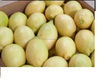 Organic Cultivation Type and Citrus Fruit Product Type fresh seedless lime and lemons