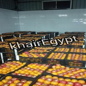 ORANGE FOR SALE COMPETITIVE PRICE & BEST QUALITY