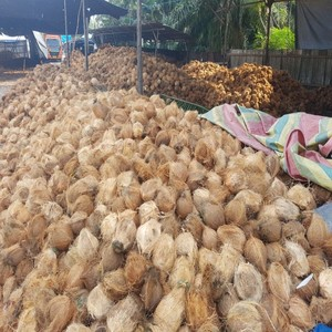 Selling Coconut Wholesale, Coconut Suppliers - Alibaba