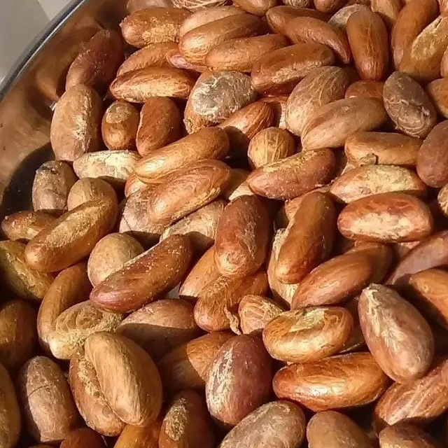 Nigeria Bitter Nuts, Nigeria Bitter Nuts Manufacturers and Suppliers
