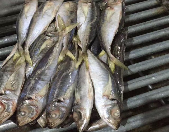 Wholesale Frozen Horse Mackerel Fish In Austria