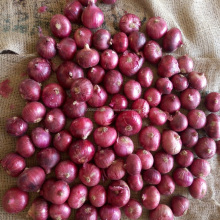 Best export quality lowest price wholesale bulk Indian nashik fresh red big onion
