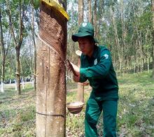 Vietnam Natural Rubber Svr Cv50, Vietnam Natural Rubber Svr Cv50