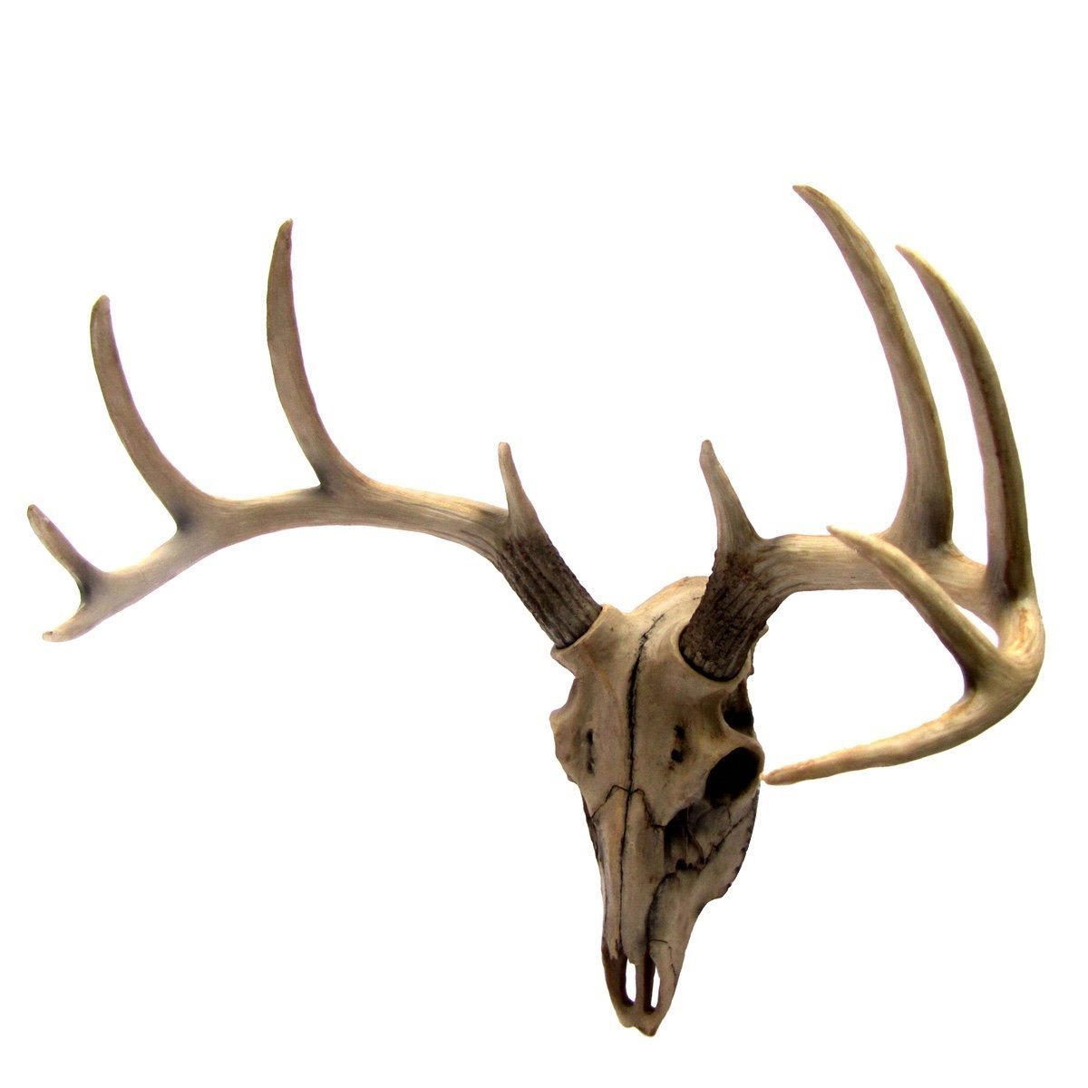 Buck Head Wall Mount Resin Deer Skull Antler Rack Bust Hunting Cabin or Lodge Decor by Gifts & Decors