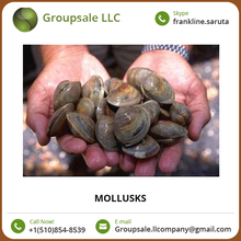 Sea Food Clams/Mollusks/ Live Razor Clams Available for Bulk Purchase