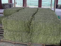 WHEAT BRAN/ALFAFA HAY/QUALITY ANIMAL FEED/HAY