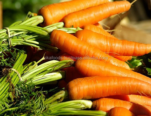 Fresh Carrot Export Standard Price For Sale High Quality With Best Price For You