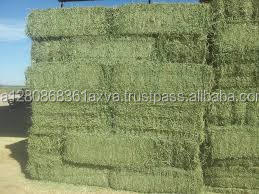 Quality Alfalfa Hay and other forages for sale 30% off