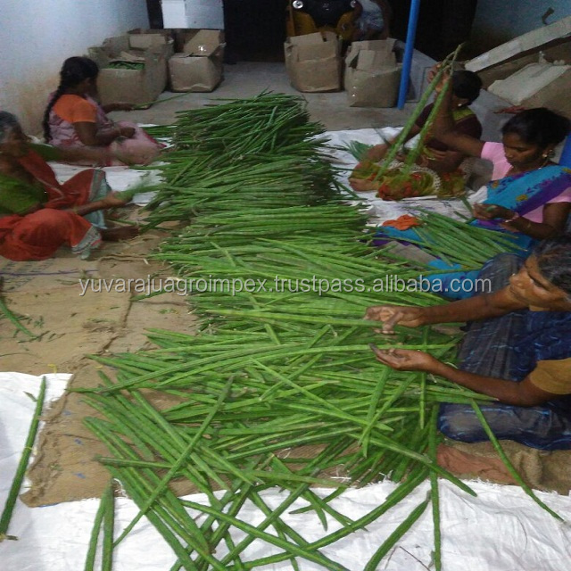 Fresh Vegetables Drumstick Exporter In India To  Uk/usa/uae/malaysia/singapore/maldives/canada/ Australia - Buy Fresh  Vegetables Drumstick/moringa