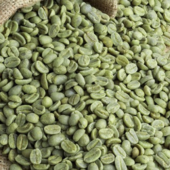 Brazil Arabic Green Coffee Beans Wholesale Buy Arabica Green