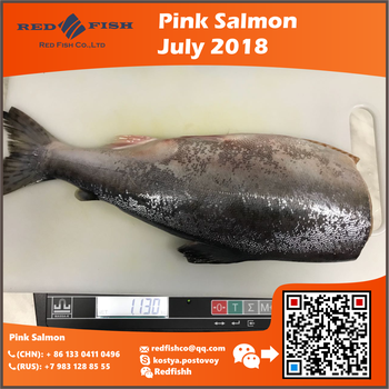 IQF Frozen Chum/Pink Salmon Price by Red Fish Co