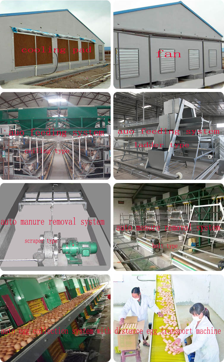 Hot Selling Dip Galvanized Chicken Cage Factory Price Chicken Egg Layer Cages For Sale Poultry Farm