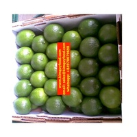 LIME FRUIT / SEEDLESS LIME FRUIT / VIETNAM FRESH LIME FRUIT