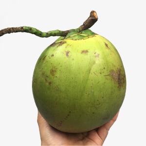 100% natural in viet nam_ green coconut_ fresh coconut_high quality_ best  price