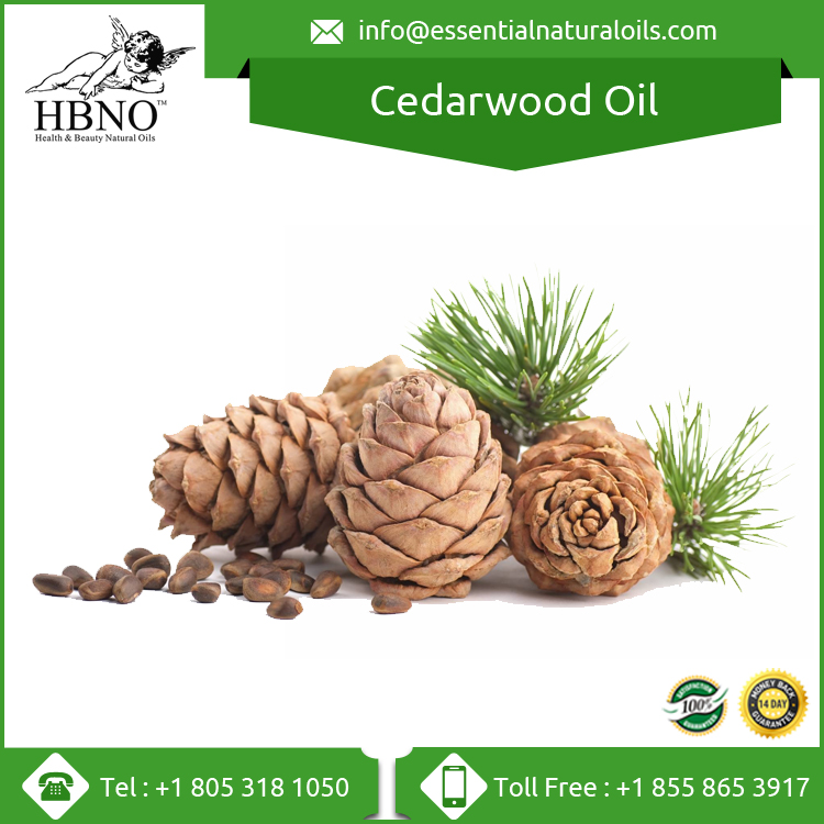 Top Quality Himalayan Cedarwood Oil Price