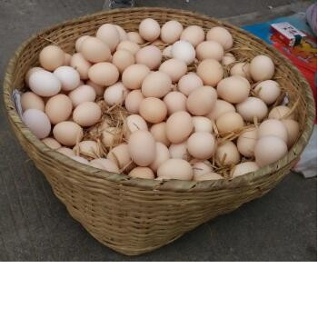 SUPPER QUALITY CHICKEN TABLE EGGS FERTILE/ HATCHING CHICKEN EGG AVAILABLE