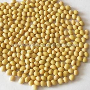 Soybean Available for Cheap Price NON GMO