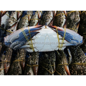 Fresh Frozen Blue Swimming Crab Products