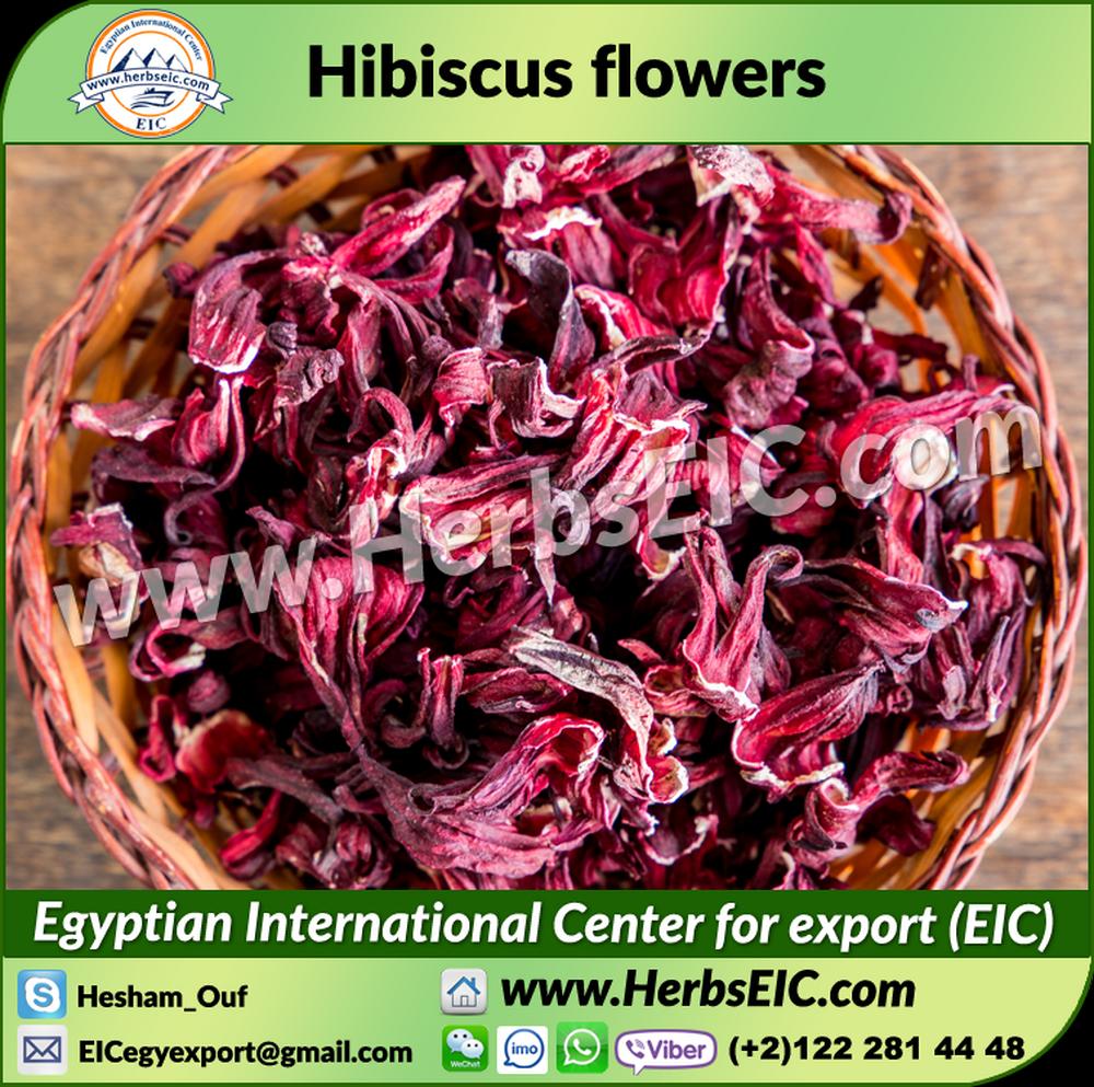 Hibiscus tea egypt hibiscus tea egypt suppliers and manufacturers hibiscus tea egypt hibiscus tea egypt suppliers and manufacturers at alibaba izmirmasajfo