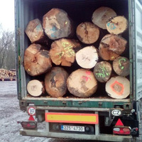 Beech logs for sales