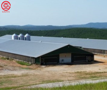 Pakistan Automatic Structural Steel Layer Chicken Poultry