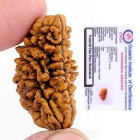 1 mukhi Natural Rudraksha | 1 faced Rudraksha Rameshwaram 15mm-20mm